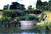Horizontal and Vertical Reed Bed System with pond