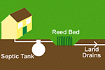 Sewage Treatment by Reed Beds